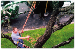 austin-tx-tree-service-aa-affordable-tree-care-tree-removal-13